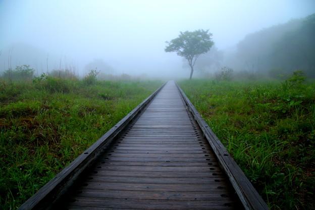 写真: 霧の木道