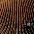 写真: 農作業