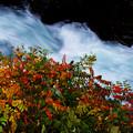 写真: 谷間の渓流
