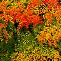 写真: 彩る葉