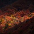 写真: 秋の寸光