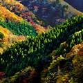 写真: 紅葉の山々