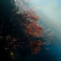 写真: 斜陽