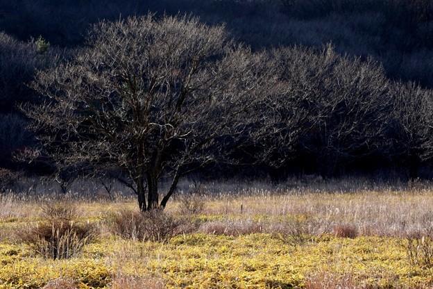 Photos: 木々連なる