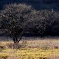 写真: 木々連なる