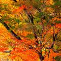 写真: 秋の彩