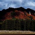 写真: 晩秋の山