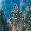 Photos: 朝の森