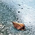 写真: 冬の一葉