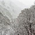写真: 雪降る山間