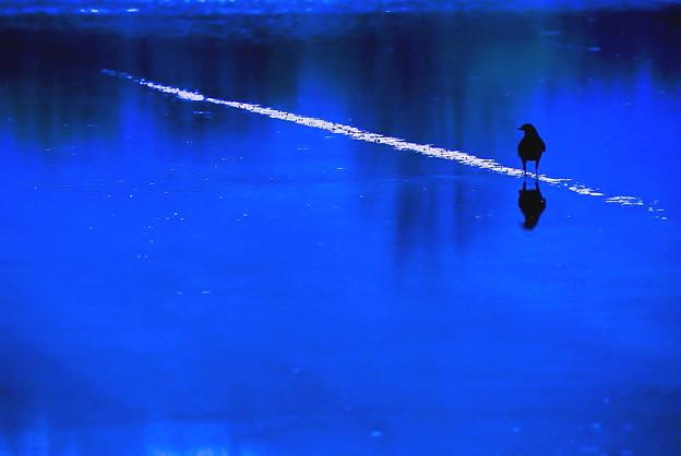 Photos: 氷上に佇む