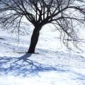 写真: 冬の影