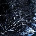 写真: 冬景