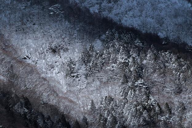 Photos: 冬の山肌