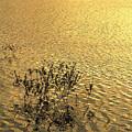 Photos: 湖畔夕景