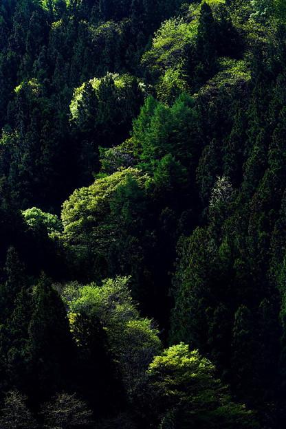 Photos: 山の新緑