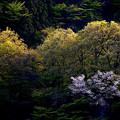 Photos: 夕暮れの光