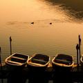 Photos: 湖畔の景