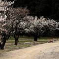 Photos: 春の始まり