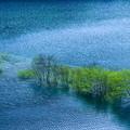 湖上の緑樹