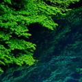 Photos: 緑葉