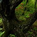 山道の樹木