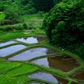 山村の農耕