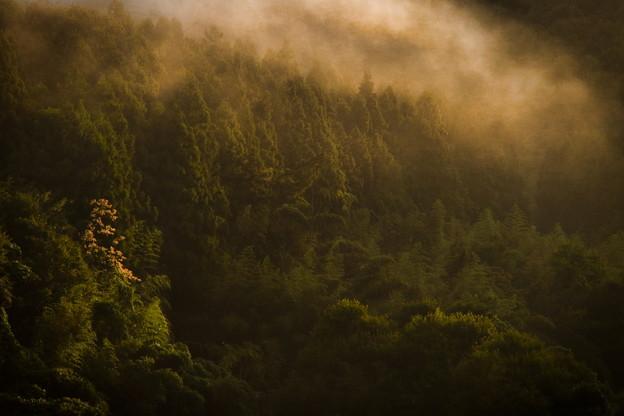 Photos: 山間の朝霧