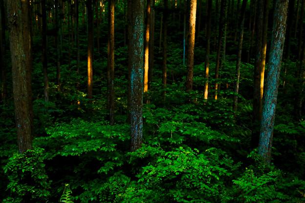 Photos: 夕陽射す