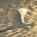 Photos: 飛翔
