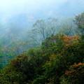 Photos: 山間の霧