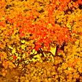 Photos: 秋の景