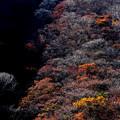 Photos: 秋の木々