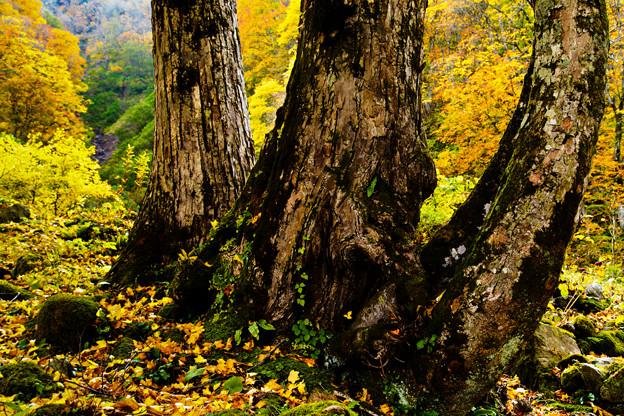 3本の樹木