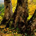 Photos: 3本の樹木
