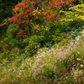 Photos: 山古志の風景2