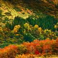 Photos: 秋の景色