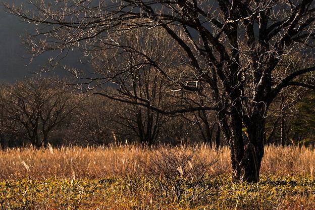 晩秋の樹木