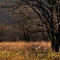 Photos: 晩秋の樹木