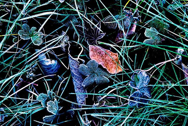 Photos: 霜降りる