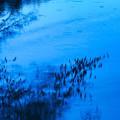 Photos: 湖面幻影