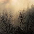 Photos: 冬の朝霧