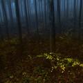Photos: 朝の林