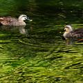 Photos: 湖面緑水