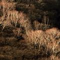 Photos: 朝の樹林