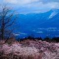 Photos: 春景遠望