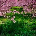 Photos: 里の春