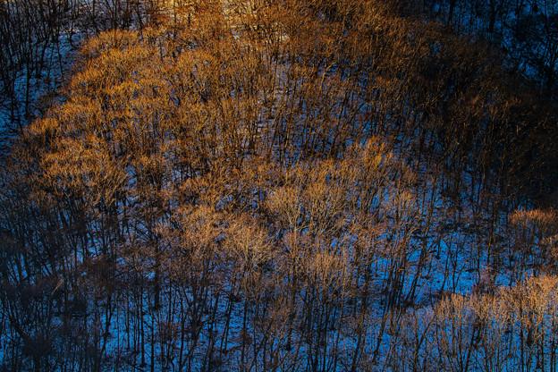 朝光射す樹木