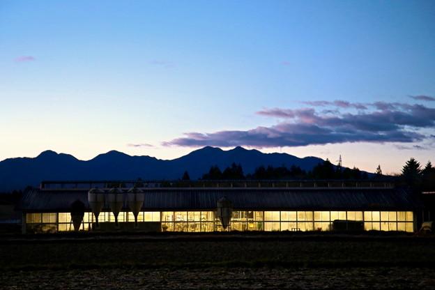 Photos: 朝の畜舎