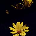 Photos: 庭先の花